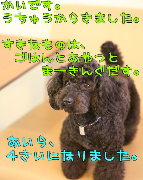IMG_62215403.jpg