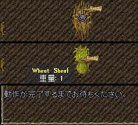 素手で麦刈できるなんて、、、UO内のキャラは超人ですなぁ