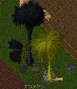 フェルッカで数人ががりで実験させて頂いた椰子の木・・・トランメルの方がまだ無事でした