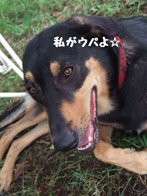 2007_08112006miseiri0238.jpg
