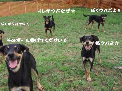 2007_08112006miseiri0270.jpg