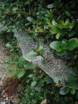 朝露にぬれて 今の時期くもの巣がいっぱい