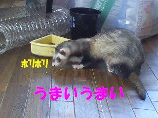 食べてますょ!!