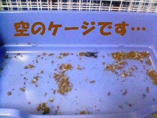 食べこぼしいぱ~い