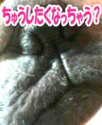 miwakunokutibiru