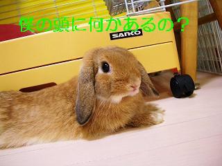 CIMG1011FC2.jpg