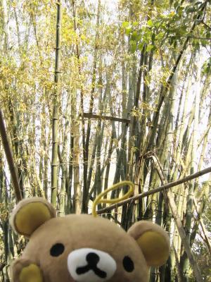 20070220新化林場-7