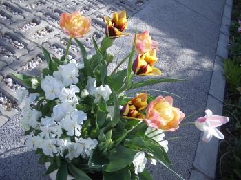 190415_tulip6.jpg