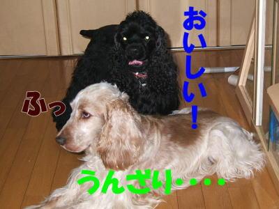 20070320121054.jpg