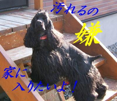 20070411164155.jpg