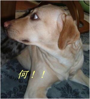 20070419101349.jpg