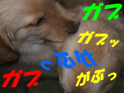 20070424194529.jpg