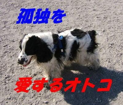 20070430204816.jpg