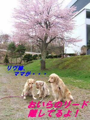 20070508145908.jpg