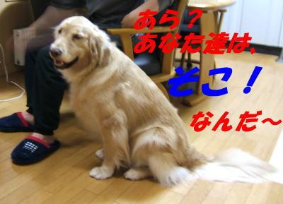 20070602164519.jpg
