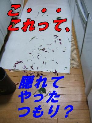 20070817082834.jpg