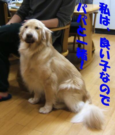 imageyoiko672.jpg