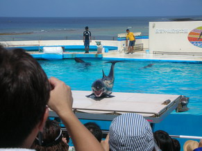 沖縄美ら海水族館4