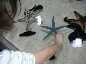 沖縄美ら海水族館5