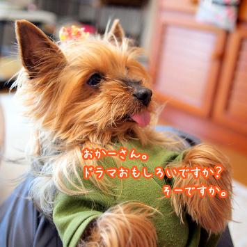 1_20110514194537.jpg