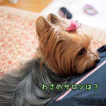1_20110517180934.jpg