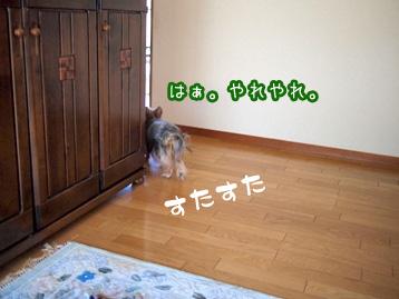2_20110507200841.jpg