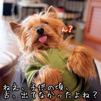 2_20110514194536.jpg