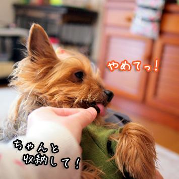 3_20110514194536.jpg