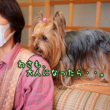 5_20110514194535.jpg