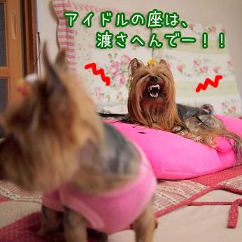 6_20110517180932.jpg