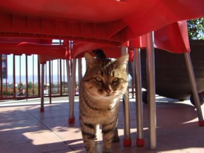 071117 昼食場所でスペイン猫