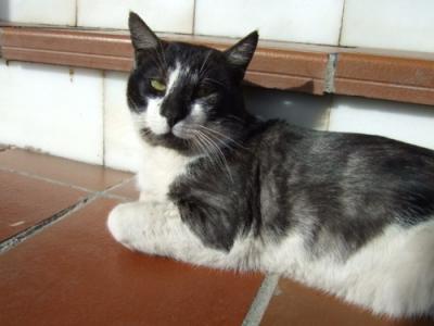 071117 休憩場所でスペイン猫