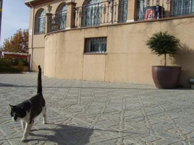 071117 休憩場所でスペイン猫_2