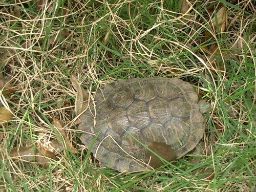 070612-turtle.jpg