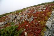 藪沢カールの草紅葉