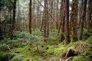 苔むす林床1