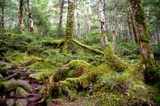 苔むす林床2