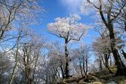 弥山への道