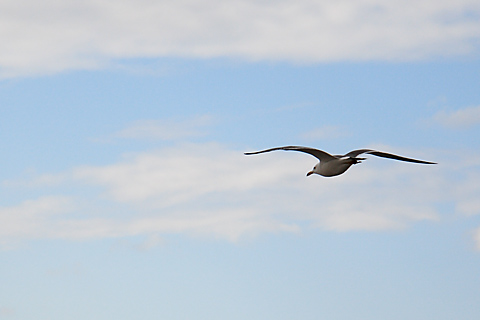 umineko_takeoff2.jpg