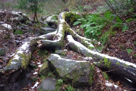倒木の上の積雪