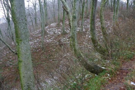 尾根の林床