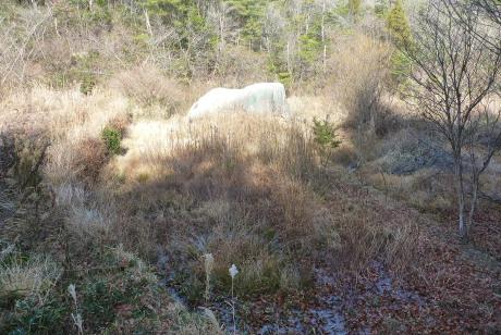 放棄田の中の昼寝岩