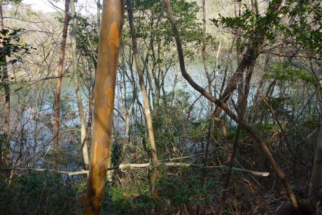 林の奥に見える池