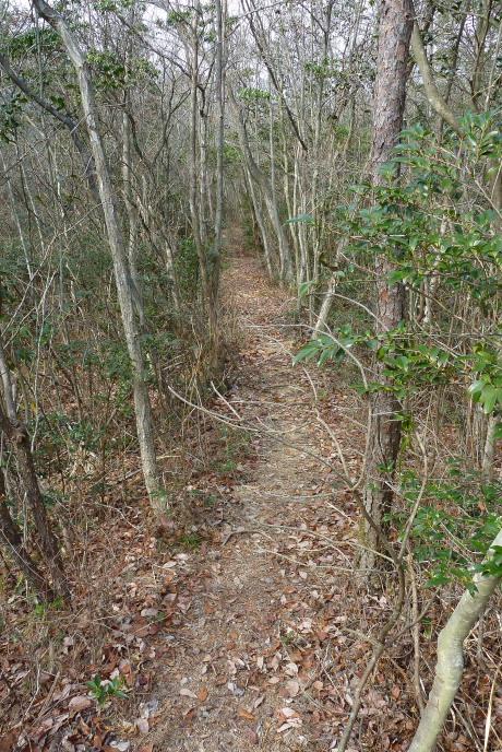 森の中の坂道