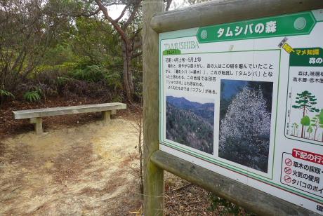 タムシバの森のベンチ
