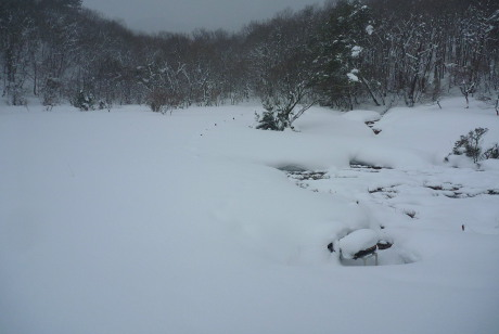 先行者なしの雪原