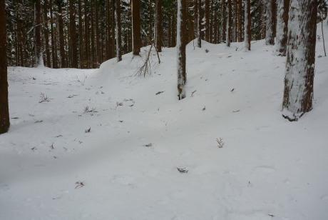 トレースのない林道