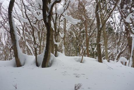 尾根の自然林
