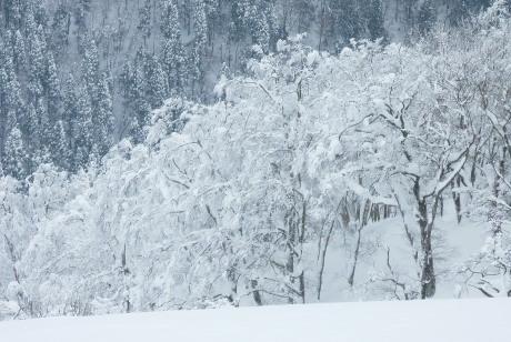 山頂直下の樹氷