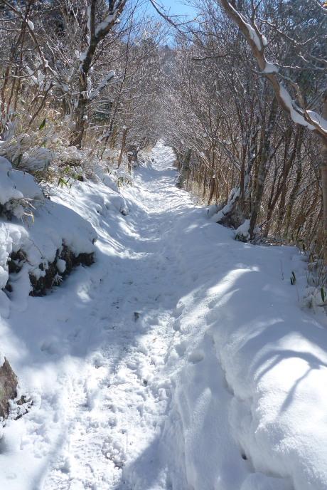 日のあたる登山道